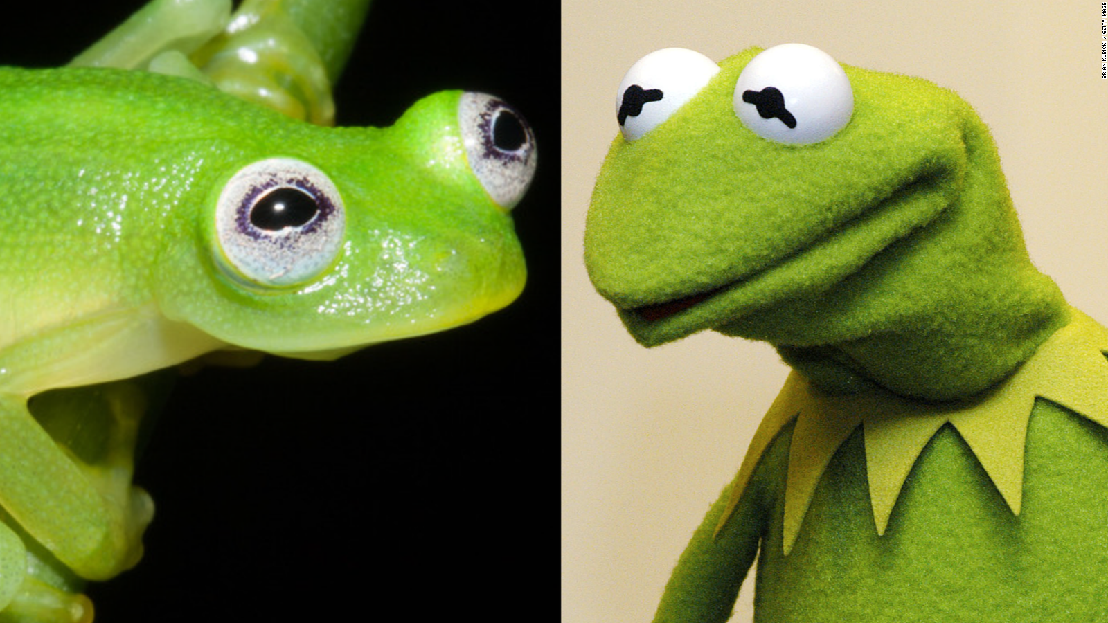 Kermit the Frog Through the Years Muppet