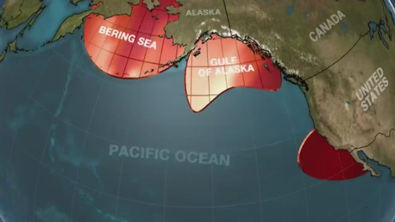Image for A blob of hot water in the Pacific Ocean killed a million seabirds, scientists say