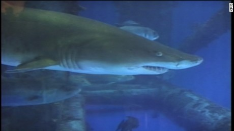 The Texas State Aquarium says a chemical mix-up is to blame for the most significant loss of marine life in its 25-year history.