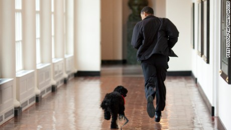 President Obama welcomes Bo, a Portuguese water dog, to the White House in April 2009.