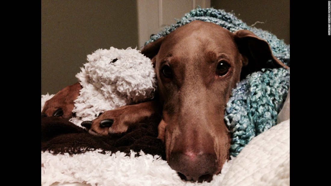 Mocha the Doberman has given her owners a couple of scares.