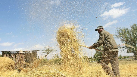 Much of Ethiopian cuisine centers around teff, a popular grain. Ethiopian farmers winnow the crop to separate the seeds from the stalks. The seeds are then taken to the local mill. Because it is gluten-free, teff is growing in popularity abroad.