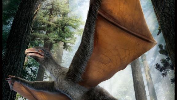 Artist reconstruction of dinosaur Yi qi.
