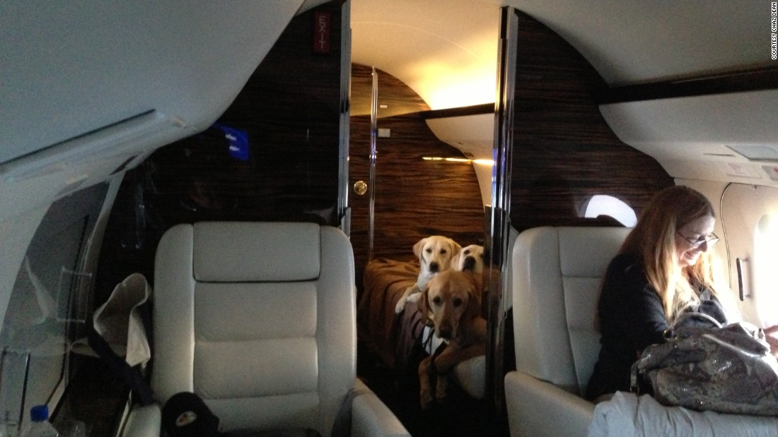 Chaz Dean's Labradors Hunter, Bella Moon and Riley June get comfortable in the back of a Gulfstream jet for their journey from L.A. to Pennsylvania.