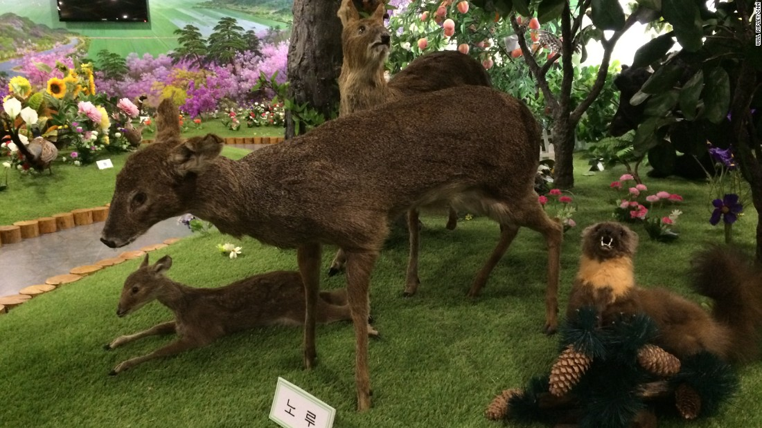 The orphanage is a taxidermist's dream, with stuffed animals from various parts of the world on display.