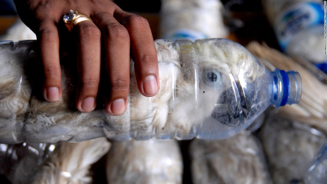 "Endangered cockatoos that were successfully secured from illegal wildlife trading are seen inside plastic water bottles in Surabaya, East Java, Indonesia on Monday, May 4. <a href=""http://www.cnn.com/2015/05/06/asia/indonesia-cockatoo-smuggling/index.html"" target=""_blank"">At least 21 cockatoos were discovered</a> at an Indonesian port during an anti-smuggling operation."