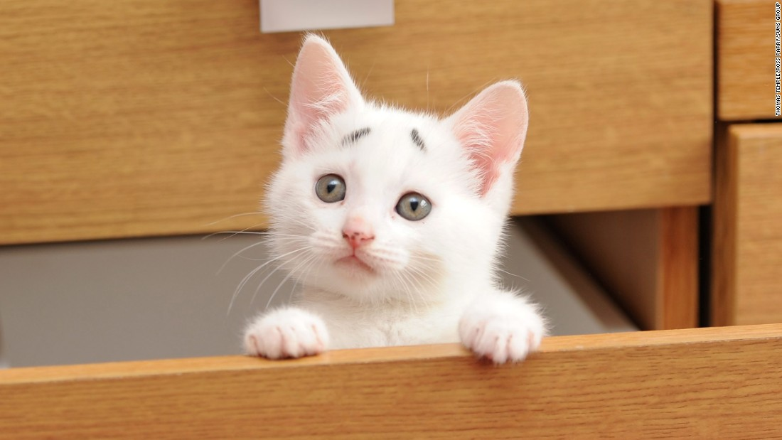 "An 8-week-old cat from Bolton, Greater Manchester, in northwest England, looks out from a drawer on Friday, May 1. His pictures went viral after his owners named him ""Confused Kitten."""