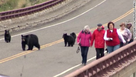 vo bears chase tourists montana_00003323