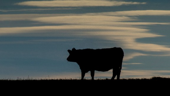 A cow is silhouetted on a pasture near the Trans-Canada Highway north of Calgary, Alberta on February 13,2015. The Canadian Food Inspection Agency (CFIA) confirmed February 13, 2015, that a case of mad cow disease has been found in Alberta, Canada .