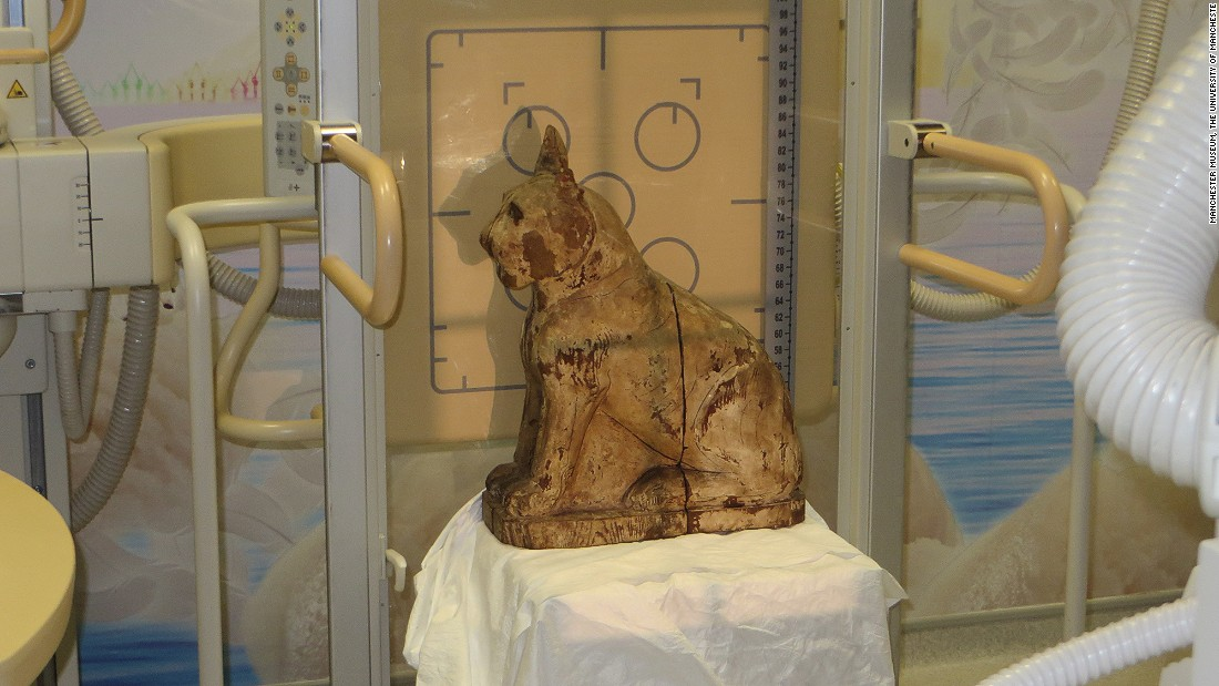 The cat coffin at Royal Manchester Children's Hospital where it  and the other animal mummies were scanned.