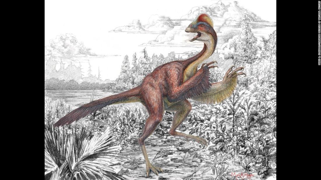 "An international committee of taxonomists selected their top 10 favorite newly discovered species for an annual list by State University of New York's College of Environmental Science and Forestry. <br /><br />Scientists working in the Hell Creek Formation of North and South Dakota found three partial skeletons of 10-foot long dinosaurs from the time of T. rex. It soon became clear that a massive, feathered dinosaur once lived in what is now North America. <br /><br />This species, nicknamed the ""chicken from hell,"" had traits of both birds and dinosaurs (though did not have much in common chickens). <br />They sported feathers and parrot like beaks, and weighed about 600 pounds. This finding follows a trend that indicates the evolutionary commonalities between today's birds and long extinct dinosaurs."