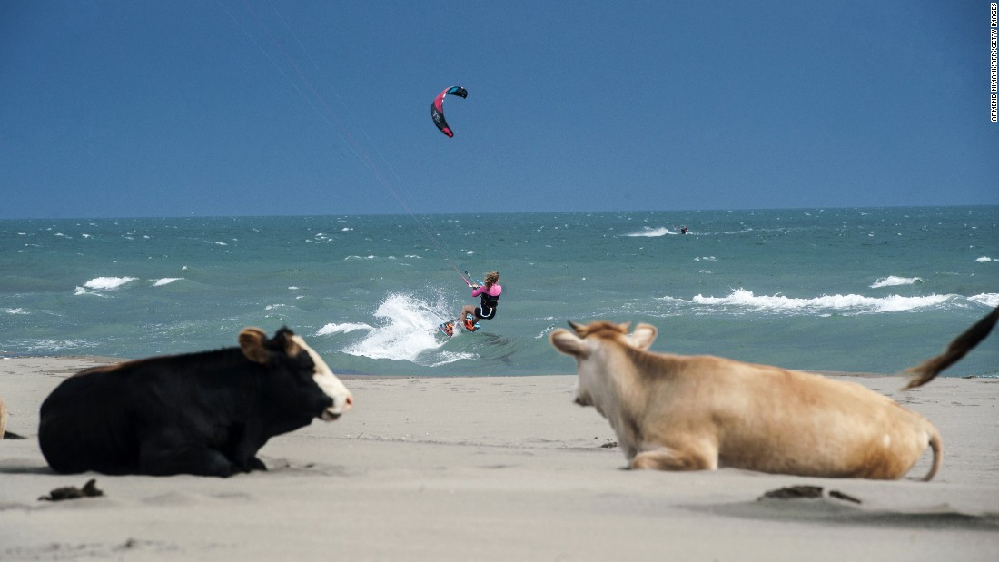 A kite surfer sails in the Mediterranean Sea as cows rest on the shore Tuesday, May 19, in Ulcinj, Montenegro.