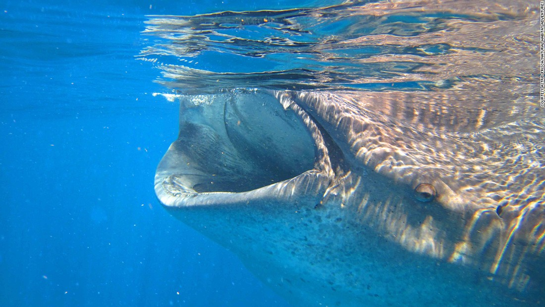11 of the best snorkeling destinations in the world cnn travel