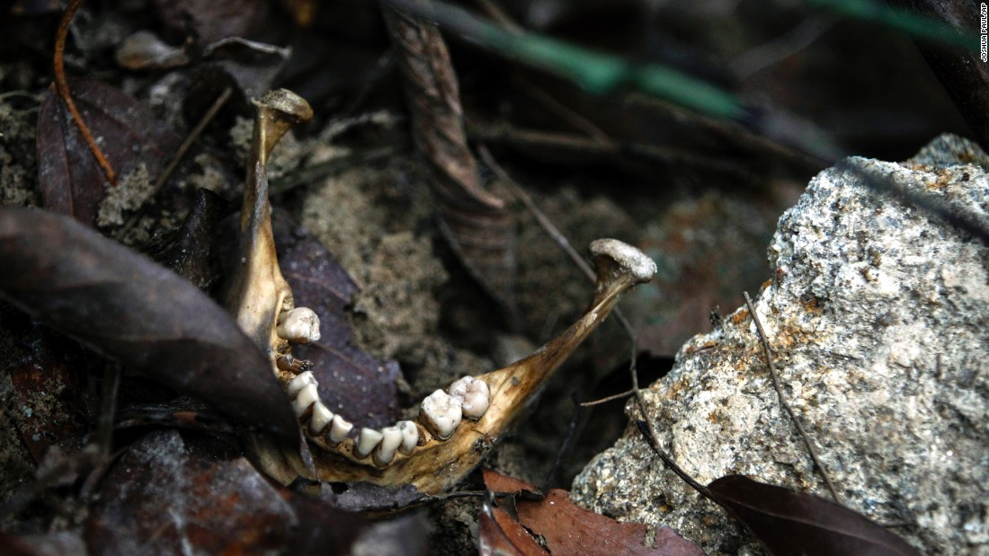 "A human jaw is seen near an unmarked grave outside Wang Kelian, Malaysia, on Tuesday, May 26. Malaysian authorities <a href=""http://www.cnn.com/2015/05/26/asia/malaysia-bodies-confirmed-migrants/index.html"" target=""_blank"">confirmed</a> that the 139 graves and 28 abandoned camps they found close to the Thai border are related to human trafficking."