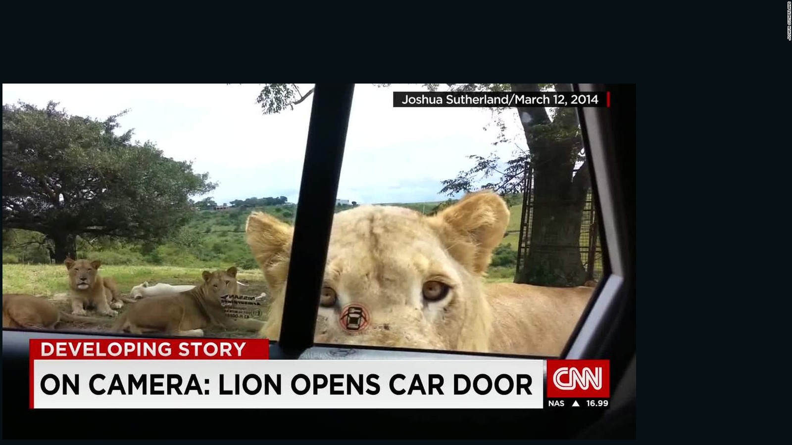Photo shows lion moments before it killed U S  tourist - CNN