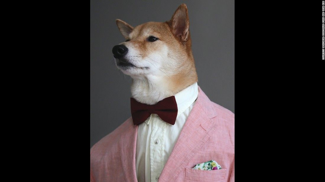 "Bodhi, the Shiba Inu who is the star of the Menswear Dog blog, wears a pale suit jacket, oxford shirt and bow tie in this image from the book <a href=""http://www.workman.com/products/9781579656164/"" target=""_blank"">""Menswear Dog Presents: The New Classics.""</a> Click through to see more of Bodhi's styles as they are presented online and in the book."