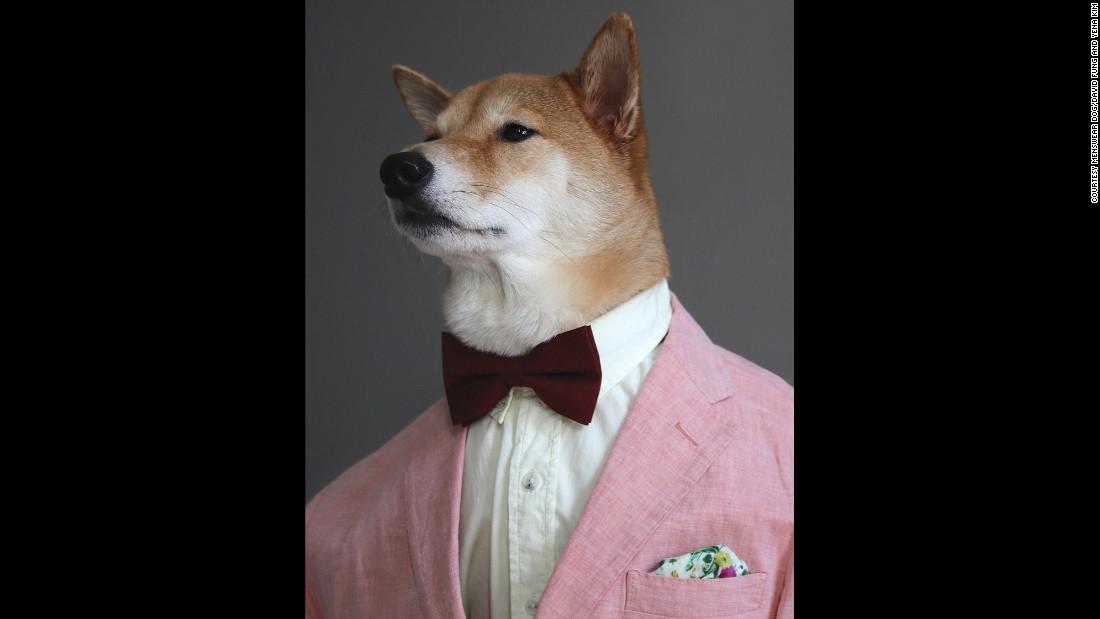 Menswear Dog Offers Fashion Advice Cnn