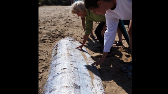 """An oarfish is a rare sight for anyone. Seeing and touching it """"was indeed one of the highlights of my 25-year career as a marine science educator,"""" said MacAulay, who's also a Catalina Island resident."""