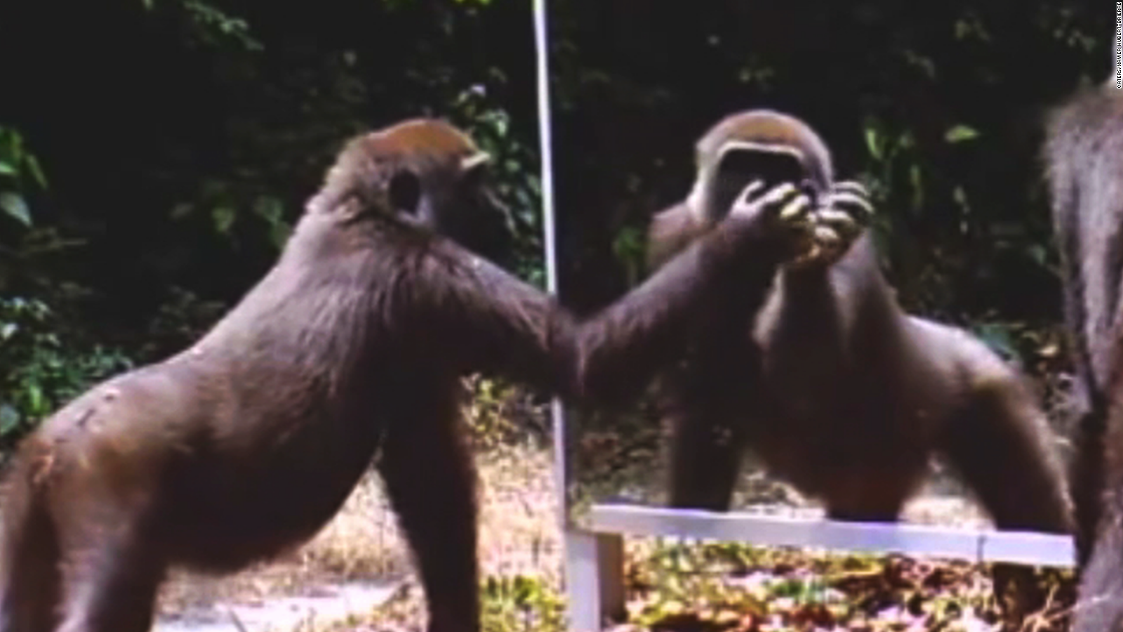 Animals' funny reactions to seeing reflections