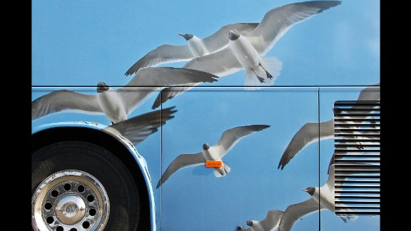 Seagulls are painted on the side of a tour bus in Paris. Taylor Holland, professor of digital media at the Paris College of Art, has taken about 1,200 photos of tour buses over the last few years.