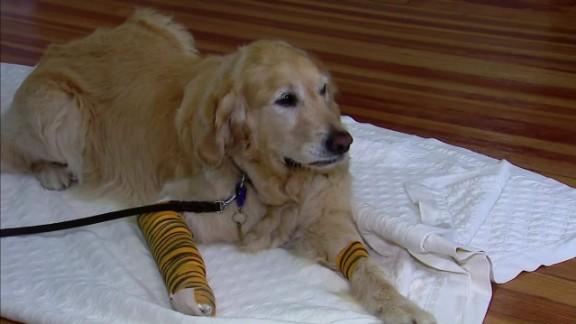 service dog hero pkg_00013124.jpg