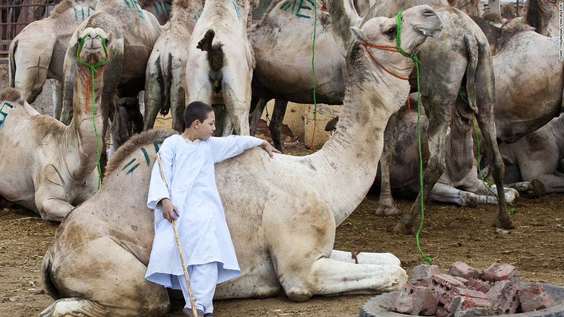 "U.S. expat <a href=""http://ireport.cnn.com/docs/DOC-1247709"">John Stavinoha</a> photographed a boy working at a camel market just outside of Cairo."