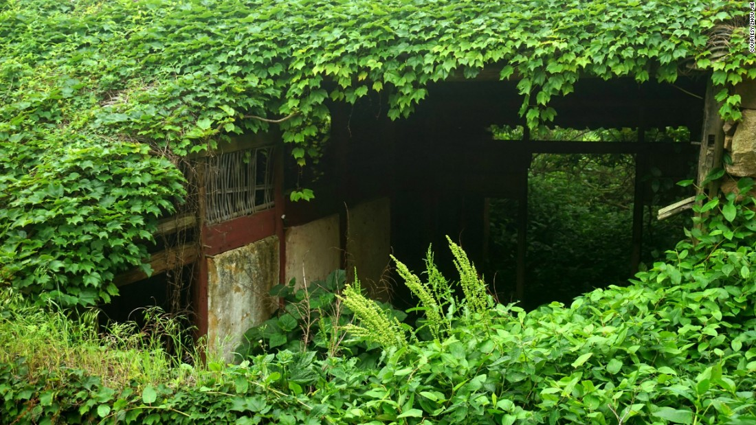 The neglected homes on Shengshan Island are now covered with the beautiful work of mother nature.