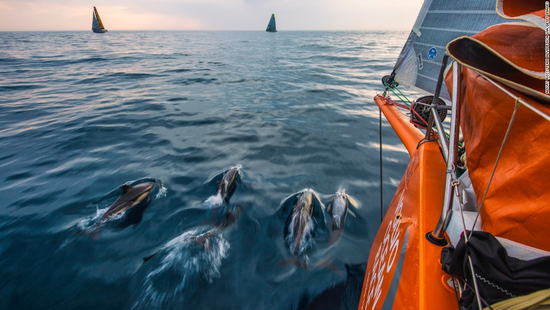 Dolphins may be a regular sight on the Volvo Ocean Race route but ADOR crew member Justin Slattery once spotted a cow floating in the Atlantic.