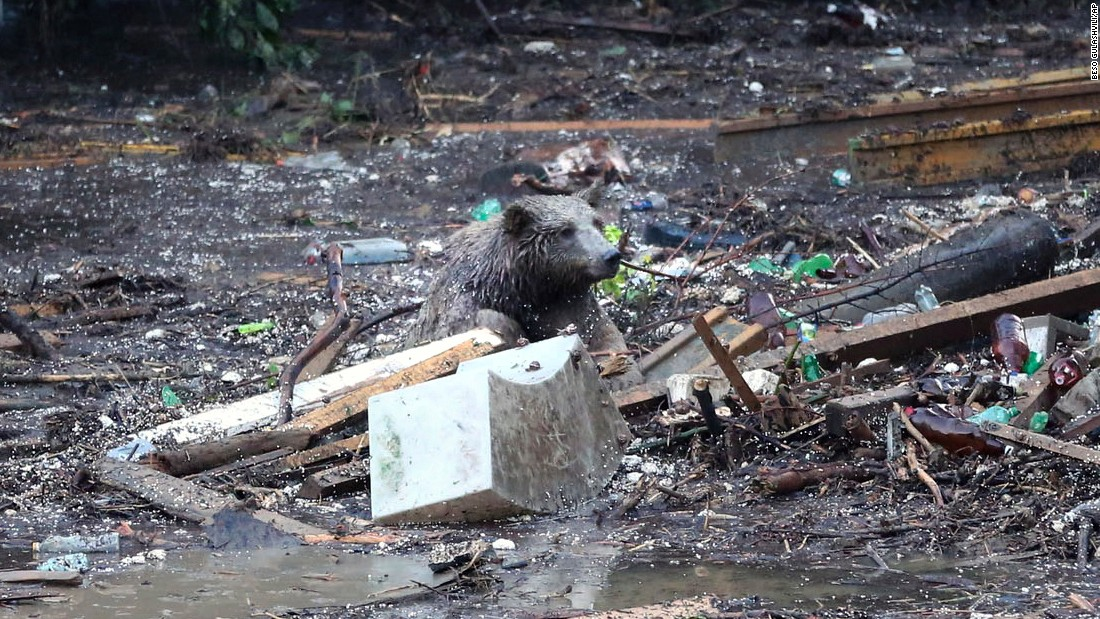 A bear sits on top of debris on June 14.