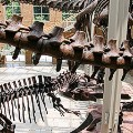 dino museums 2015-atlanta