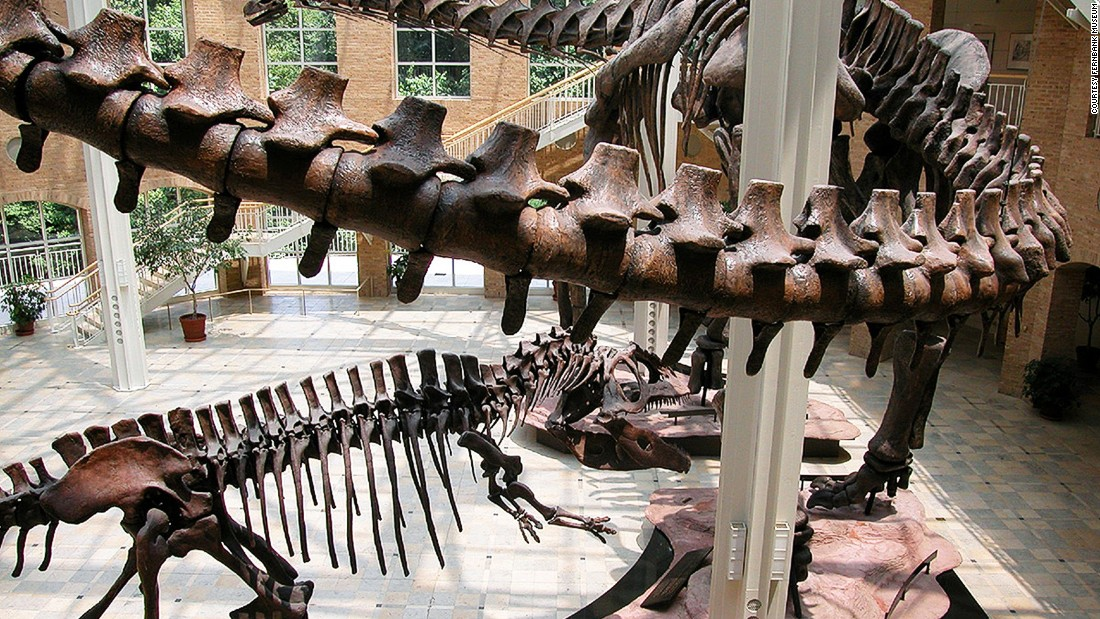 The Argentinosaurus is the largest dinosaur ever classified. The 100-ton beast's skeleton is on display at the Fernbank Museum of Natural History.