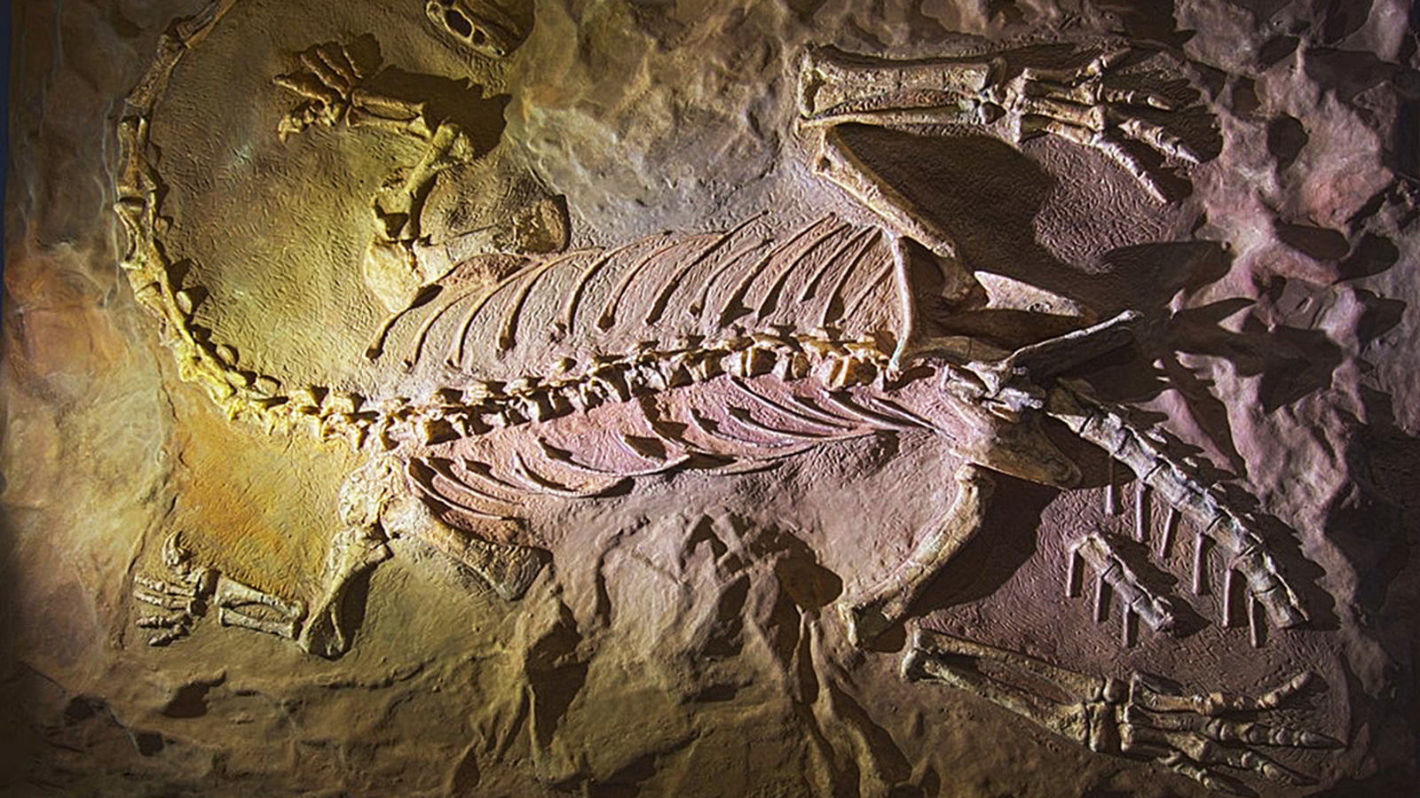 Have Dinosaur And Human Fossils Been Found Together