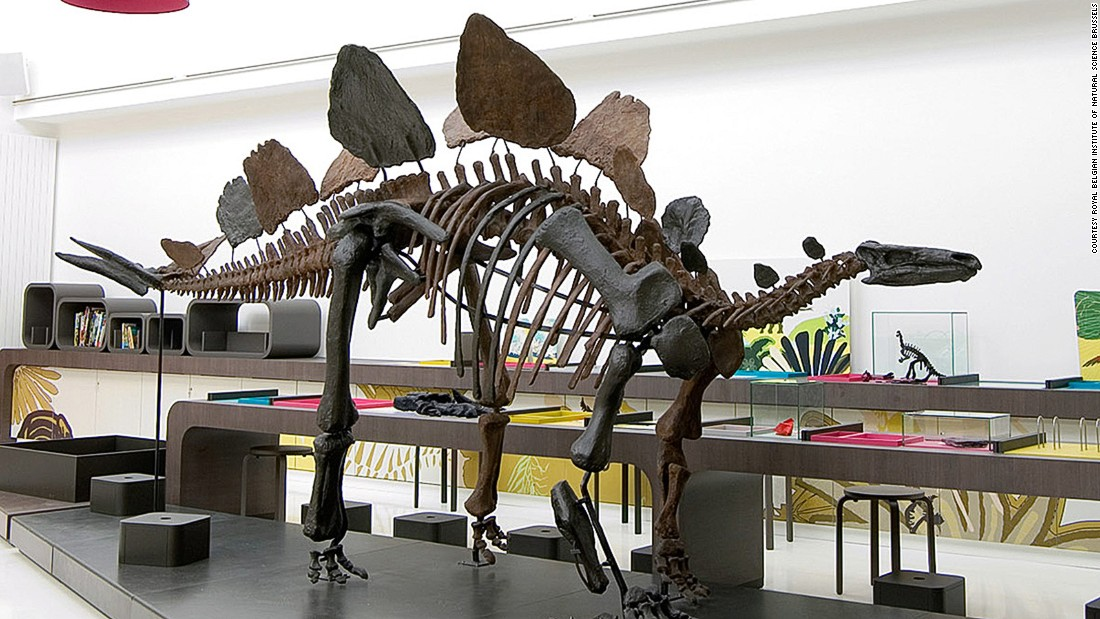 With the largest dinosaur hall in the world, this museum has an impressive collection of fossilized skeletons and casts.