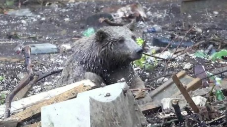 Flood causes zoo animal frenzy in Tbilisi