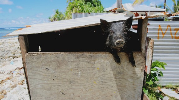 When floodwaters rush in, residents say they tie their animals to trees to try to keep them from disappearing into the Pacific Ocean.