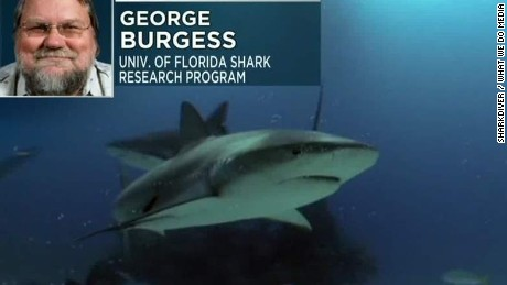 response to shark attacks george burgess sot ac_00010326
