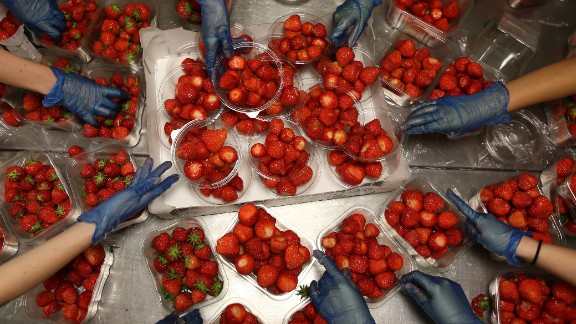 The preparation of the strawberries is serious business.