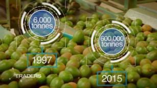 Mexico's great avocado boom