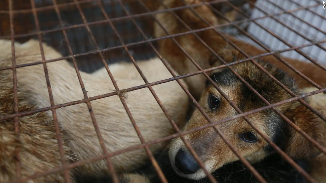 Hypocrisy >> China dog meat festival: Is it really so bad? (Opinion) - CNN
