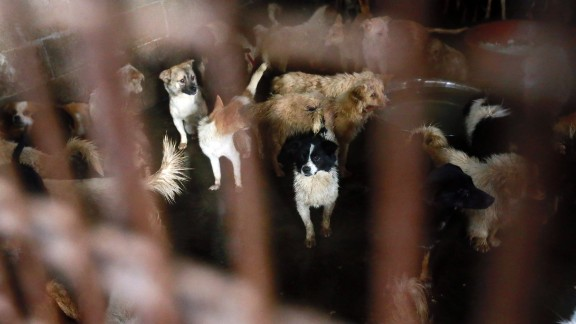 In a slaughterhouse, hundreds of dogs await their death.