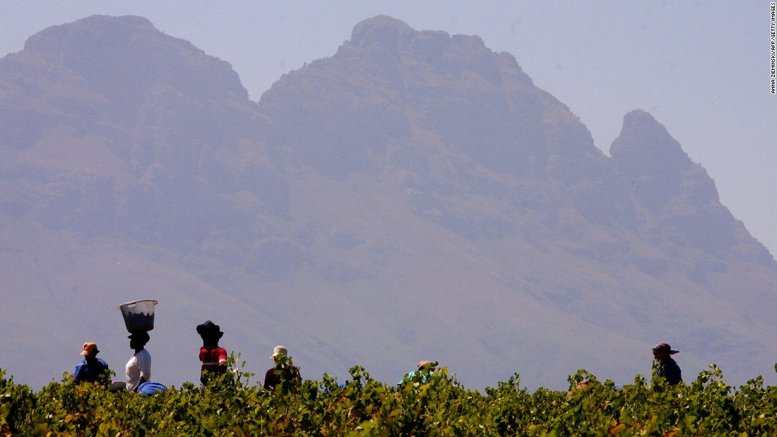 One aspect that sets South Africa's wine industry apart is the ubiquity of ethical accreditations. Over 79% of the nation's vineyards have one -- Fairtrade and WIETA being the most popular -- compared to only 20% of producers internationally.