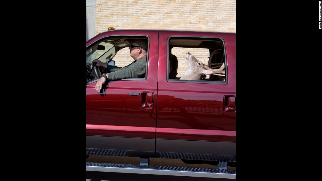 Jim Allred, a taxidermist from North Carolina, drives his showpiece -- a white-tailed deer.