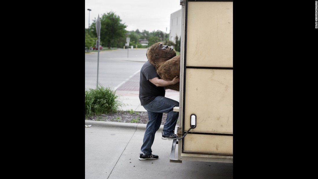 A man lifts a Bigfoot replica into a trailer.