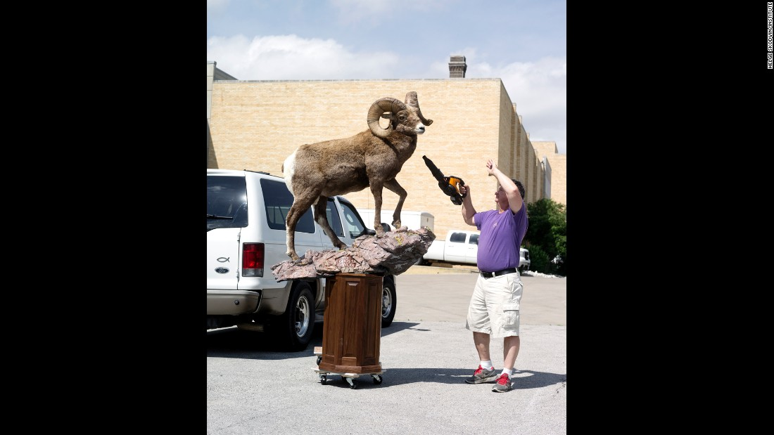 "Carl Tregre, from Houma, Louisiana, prepares his bighorn sheep he calls ""The Ghost Dancer."""