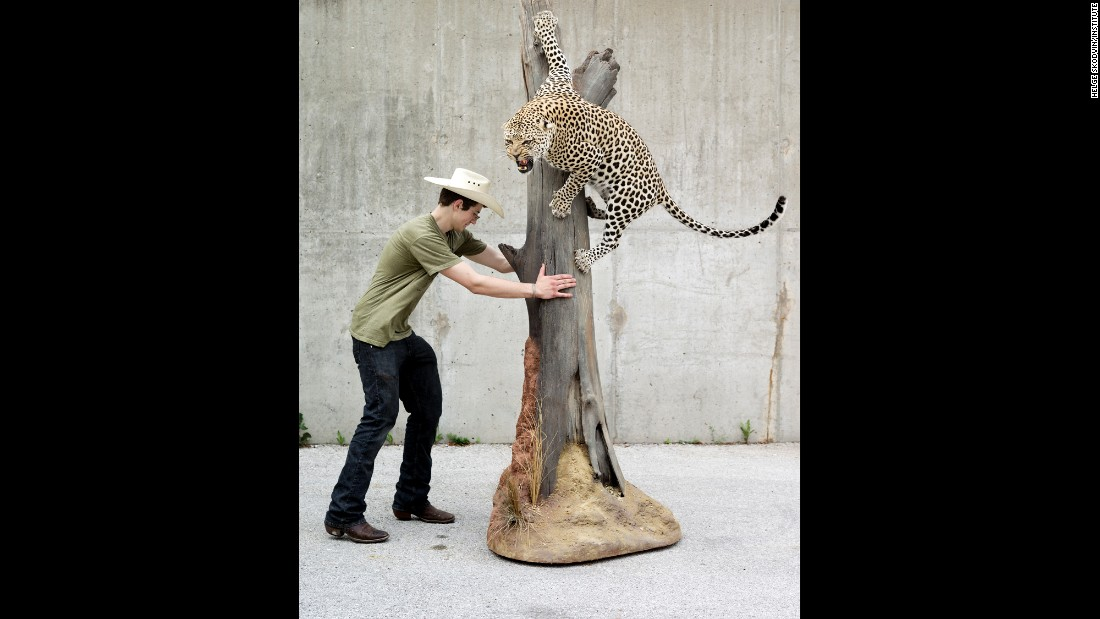 Daniel Meng, from Bismarck, North Dakota, puts his prize leopard into a trailer after winning the Best in World award for the large mammal category.