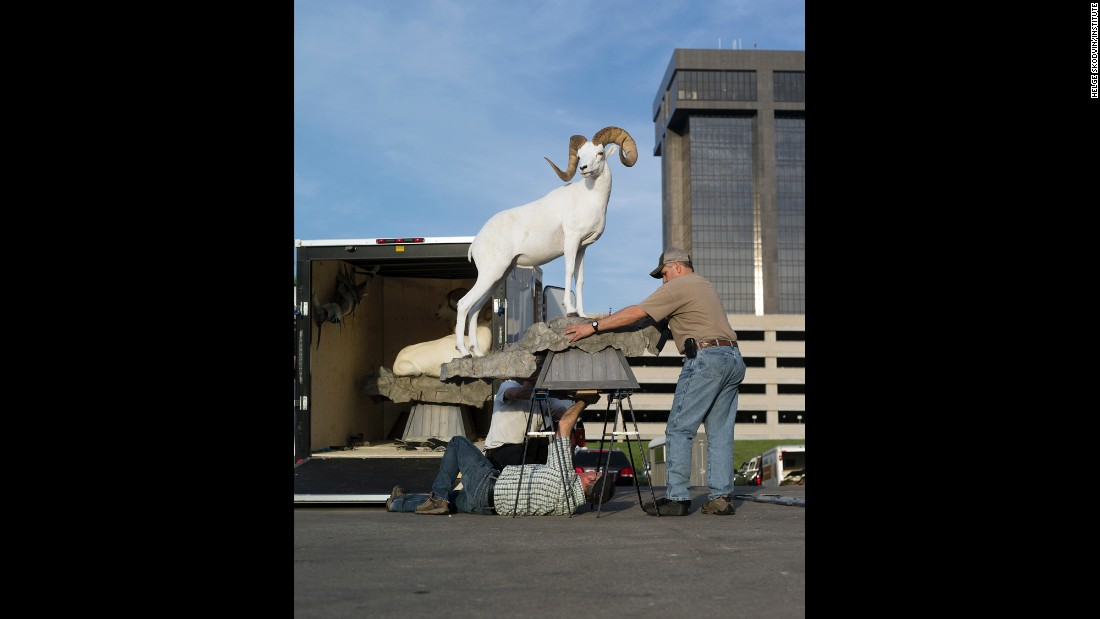 Tony Grabowski, bottom, mounts a Dall sheep.