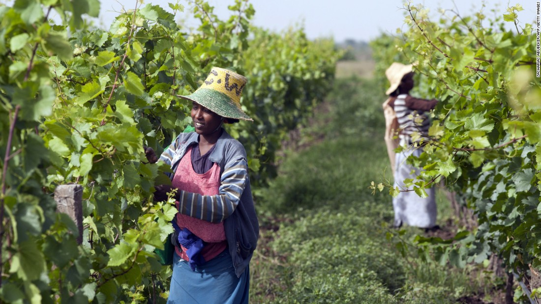 However, despite its dominance, South Africa does not have a monopoly on the continent when it comes to wine. Ethiopia is seeing a surge in wine making after French-based firm Castel recently invested in local vineyards.