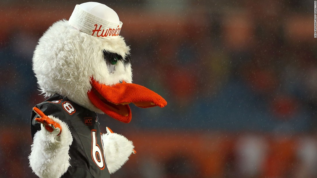 No, Donald Duck hasn't fallen on hard times. This is Sebastian, mascot for the Miami Hurricanes football team, and he's an ibis.