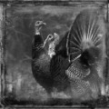 09 cnnphotos bird tintypes RESTRICTED