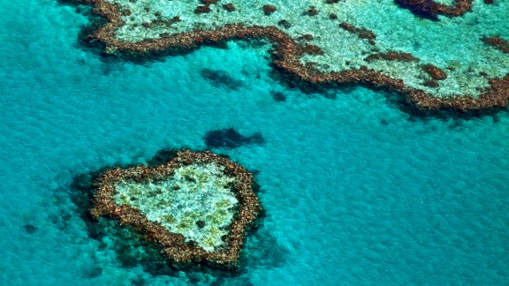 The world's largest coral reef ecosystem hosts scores of marine species, but scientists say that it could become extinct as soon as 2050 due to climate change.